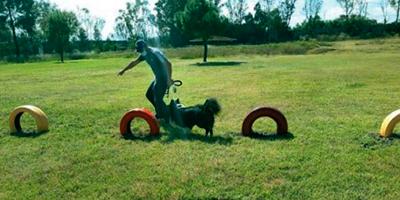 ¡Guuuaaauuuu! más diversión en compañía de tu mascota