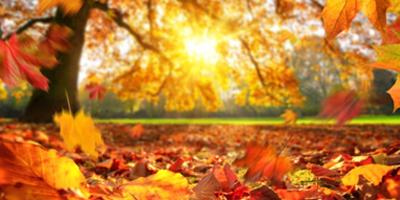 Días conmemorativos en octubre segunda parte